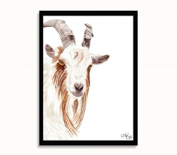 Dieren poster Gaia de geit